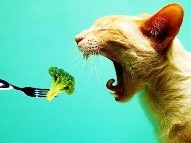 Чем вегетарианец отличается от вегана?