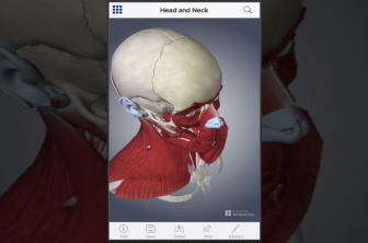Обзор приложения Johns Hopkins Muscle Anatomy 3D